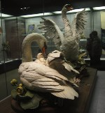 A pair of swans given by President Richard Nixon.