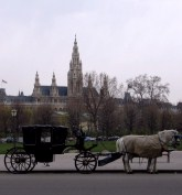 A carriage and a view of the Rathaus