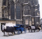 Carriages next to the cathedral